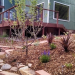 Landscaping in town Durango CO stacked flagstone wall, perennials, apple tree