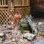 Installing Moss Rock mini garden at Lakeside Cabin near Durango Co