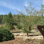 Durango Ranch landscaping with boulders and trees by Gardenhart Landscape & Design
