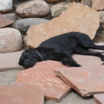 Dogs like to help in Durango Colorado with Landscaping and Gardenhart Landscape & Design