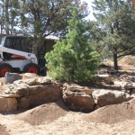 Installing a SW White Pine in this Landscaping project by Landscape Architect David Hart.