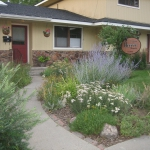 Commercial Landscaping at Thrive Chiro Blooming in Summer by Gardenhart Landscape & Design