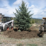 Gardenhart Planting Blue Spruce Picture
